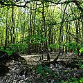 Orbite 1 kilomètre (2/10) - petits bois