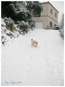 cachou pente neige 14 02 2012