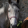 Photos JMP©Koufra 12 - Chevaux - 16062019 - 0008