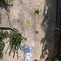 Street art : nice, antibes, cannes, valbonne..
