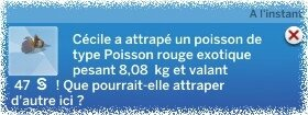 Poisson rouge exotic