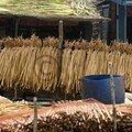 Un jour, des photos - la jacinthe d'eau