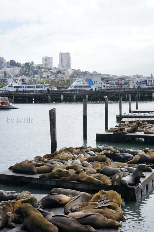 san francisco sea lions 92