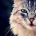 chatnht7vrAbir1s5laego1_1280