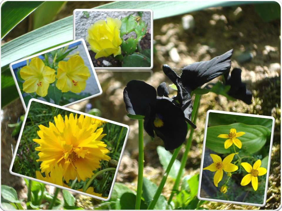 Fleurs 2009-2010 (15)