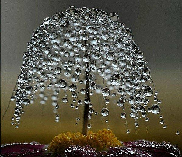 Goutte-de-pluie