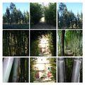 Derrière les bambous...
