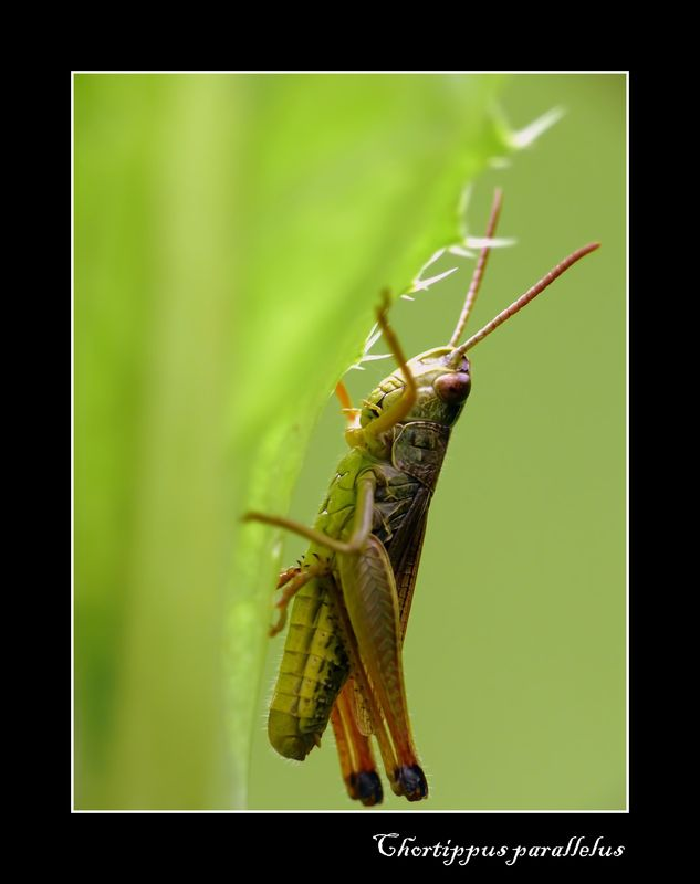 insecte 157_filtered