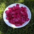 Gelée de pétales de roses .