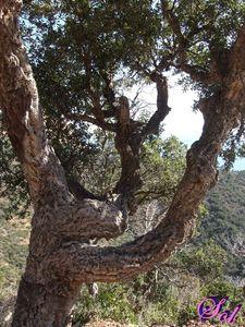 arbre_05