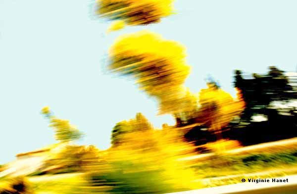 Arbres jaunes