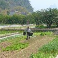 Xinping, les potagers