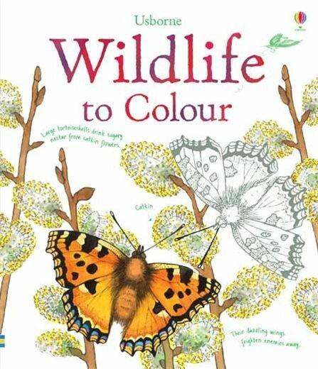 wildlife-to-colour