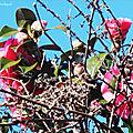 1-Lever de soleil et Fleurs de Léon 120219