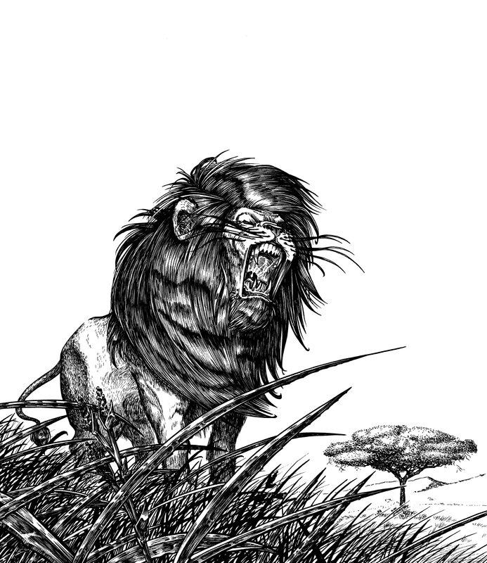 lion NB