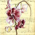 Orchidée s'inspirant de l'art oriental