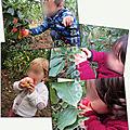 Jeudi 17 octobre 2019 - ram cueillette de pommes