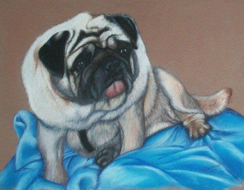 Junior, carlin au pastel sec sur pastelmat, format 40 x 50 cm