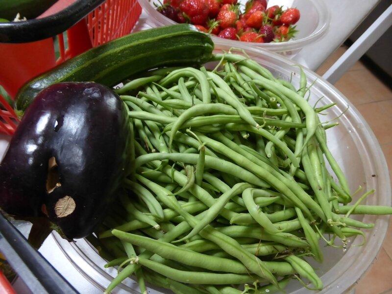 1-haricots, courgette, aubergine