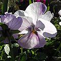 fleurs-ville_2