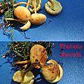 Pholiota alnicola