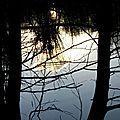 1901022-arbre-etang