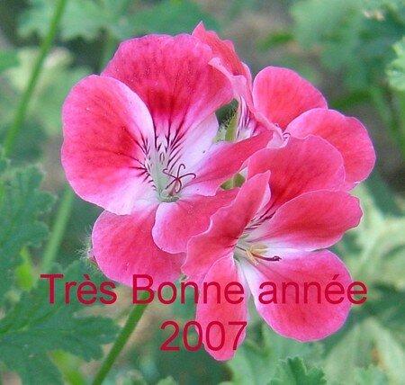 G_ranium_citronnelle__1_2007