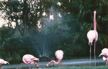 flamingos_00