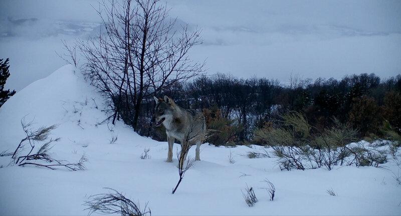 Visuel-Marche-avec-les-loups-4