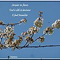 Haïku et cerisier en fleurs