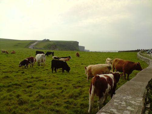 la belle vie au bord des Cliff of Moher...