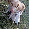 Sweety larguée sur Basse Terre avec ses chiots