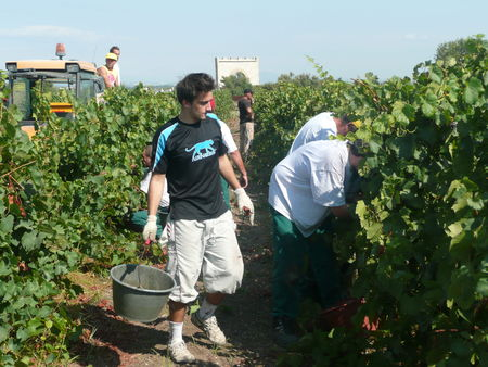 Vendanges_Maguelone_003
