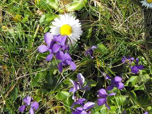 03_2009_Mont_avril_036