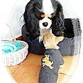Mini couture pour mini chien