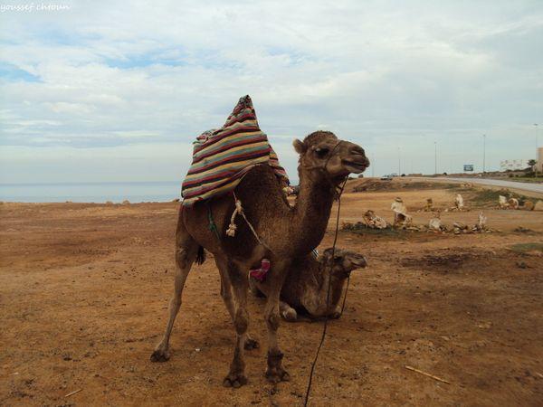 morocco__15_