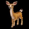 Cervidés (cerfs, rennes, chevreuils)