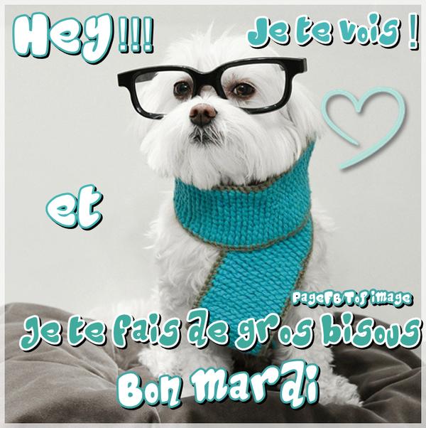 2 b ma bon mardi chien BPat19
