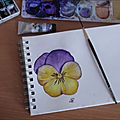 Pensées à l'aquarelle 1ère partie et comment dessiner une pensée - pansies in watercolor and howto drawing a pansy