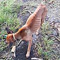 chien errant au Gosier 2