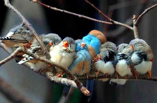 famille_oiseaux