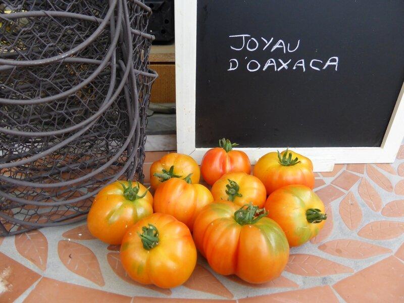 17-tomates joyau d'oaxaca