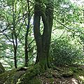 A l'ombre des arbres