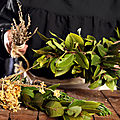 toute maladie peut être mortelle, faites vous guérir par les vertus de la plante