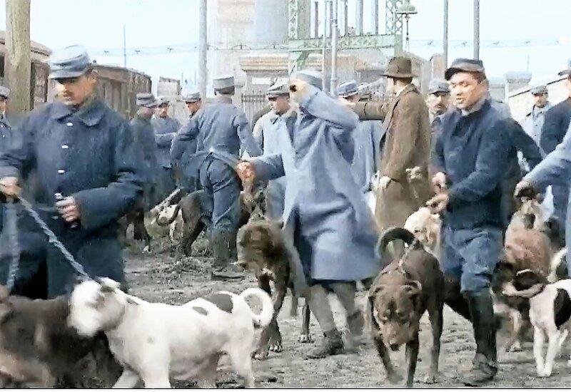 Verdun 37