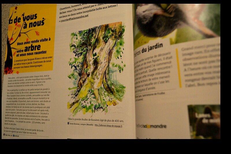 magazinesalamandre 003