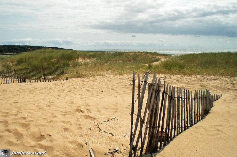 Dunes-et-végétation