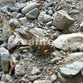 nicoya_cerro escondido_squelette de cigale_rivière guarial_02