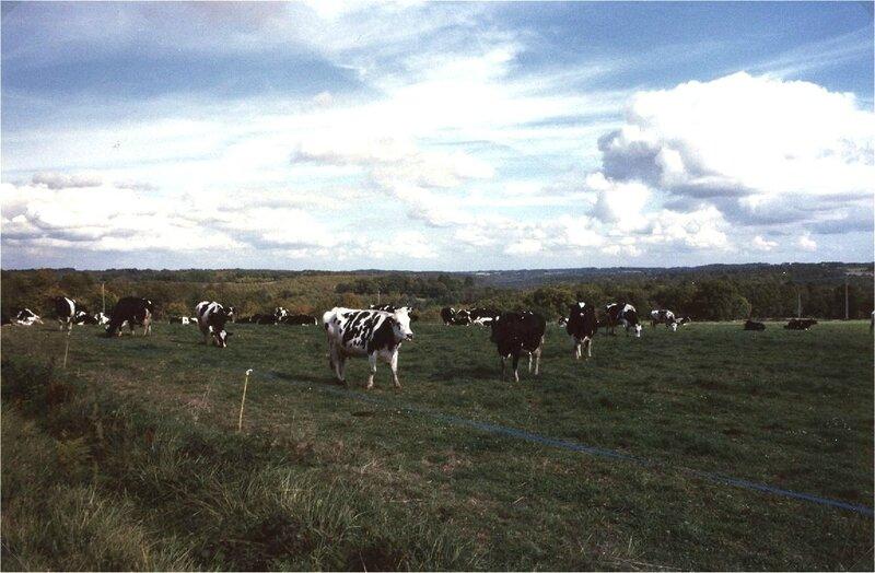 plim'Holstein à Borie-Bru