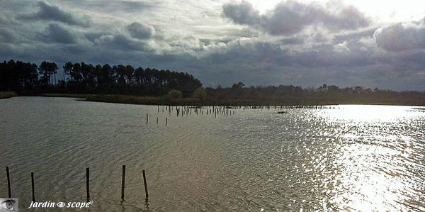 Parc-ornithologique-du-Teich
